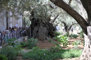 The Garden of Gethsemene was the location of an Olive Press.
