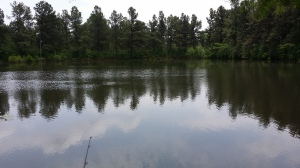 Pick's Pond, May 2015.