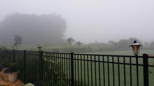 The fog after the rain.