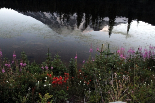 The mountain's reflection in the flower-filled shoreline.