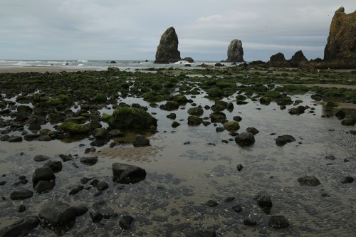 Tide pool at the base of Haystack Rock in Cannon Beach, Oregon.