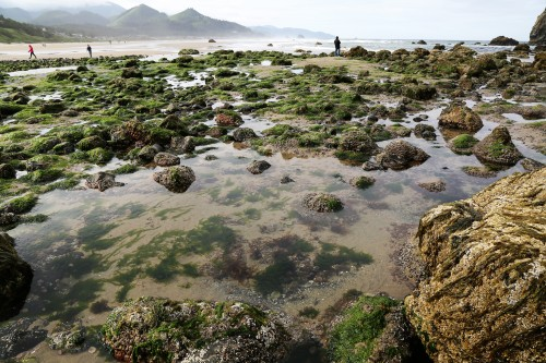 Cannon Beach at Low Tide. It was mid morning and low clouds were still hanging around.