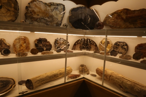 Fossilized wood of a variety of species.