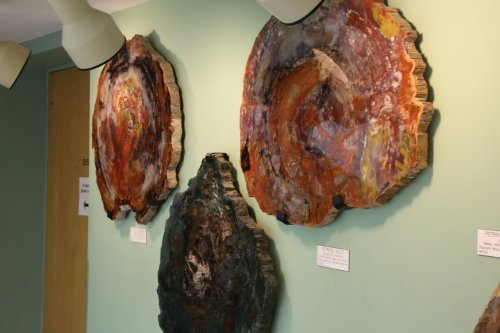 I had no idea how beautiful a slice of petrified wood could be. These are as much pieces of art as they are rock specimens.