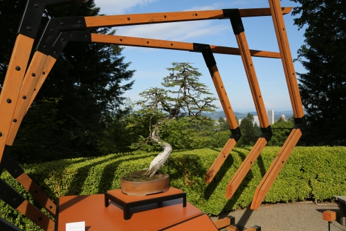 The American Bonzai was the special exhibit in the Japanese Garden. This tree is over 100 years old.