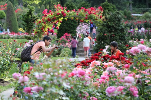 "There were hundreds of people wandering through the gardens snapping pictures of all sorts. There were prom pictures, wedding pictures, family photos, tons of ""selfie with rose"" pics, and of course lots, of couples-in-love pics."