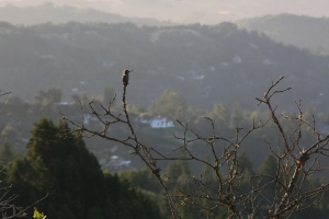 Hummingbird Posing for Pics