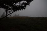 Roan Mountain – Fog andRainbows-1-4