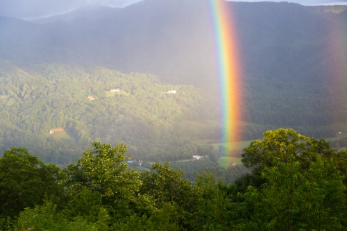 Roan Mountain - Fog and Rainbows-14