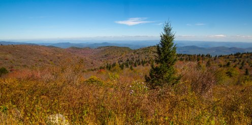 Pisgah National Forest-100
