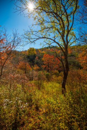Pisgah National Forest-37