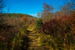 Pisgah National Forest-38