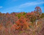 Pisgah National Forest-50