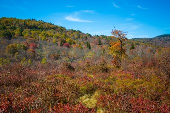 Pisgah National Forest-52