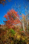 Pisgah National Forest-53
