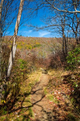 Pisgah National Forest-58