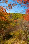 Pisgah National Forest-63