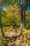 Pisgah National Forest-65
