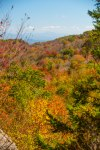 Pisgah National Forest-72