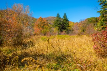 Pisgah National Forest-92