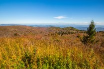 Pisgah National Forest-97