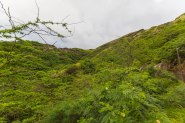 Diamond Head, Hanauma Bay, & Koko Head-22