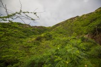 Diamond Head, Hanauma Bay, & Koko Head-4