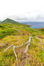 Diamond Head, Hanauma Bay, & Koko Head-67