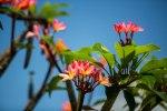 Kauai – Day1-21