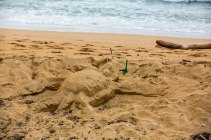 Sea turtle sculptures...