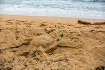 Sea turtle sculptures...