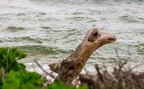 And Sea Monstors on shore.