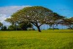 Ultimate Oahu CircleTour-157
