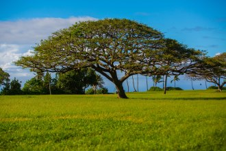 These Monkey-pod trees form a beautiful canopy in many places on the island.