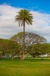 Ultimate Oahu CircleTour-172
